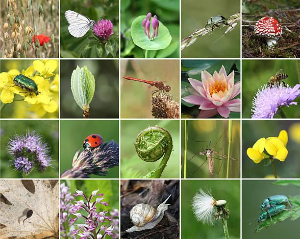 mapa mental de la biodiversidad de especies