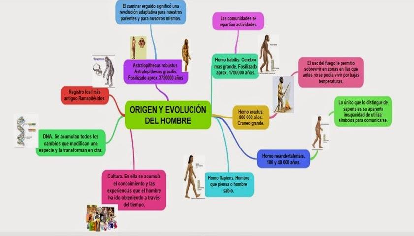 mapa conceptual de la evolucion del hombre primitivo