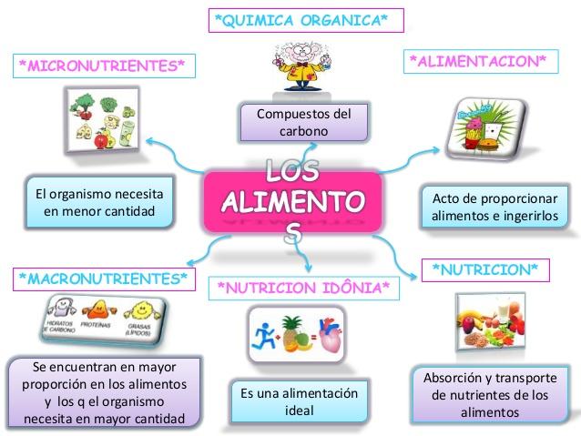 mapa mental de la nutricion autotrofa y heterotrofa