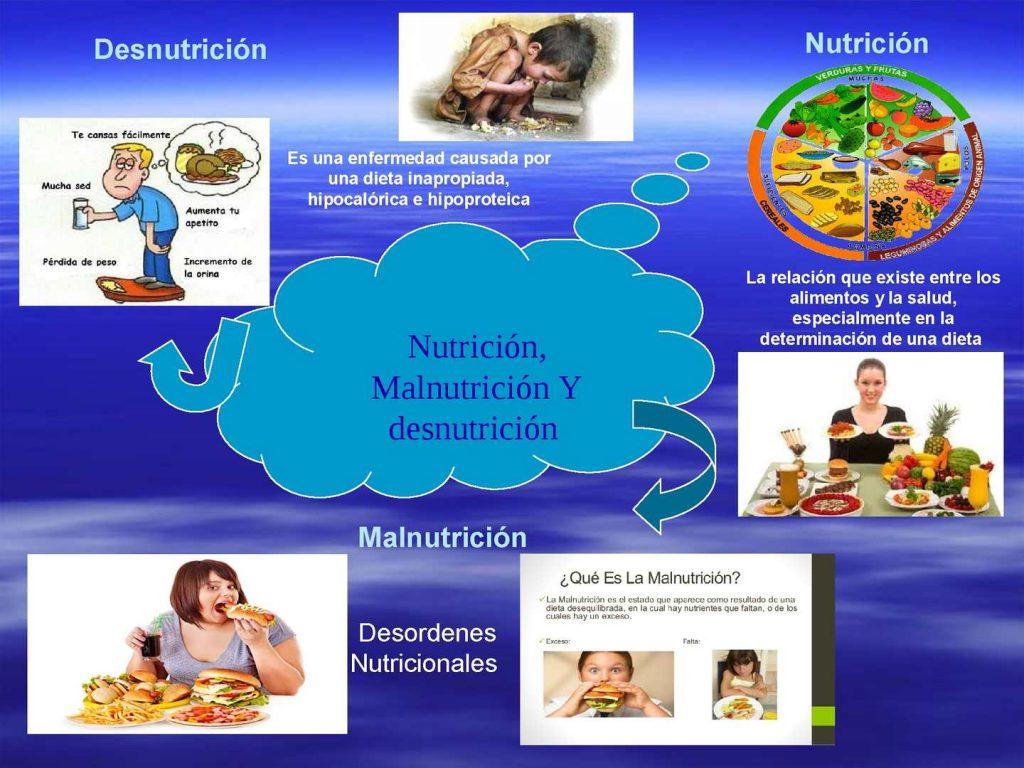 mapa mental de nutricion autotrofa y heterotrofa