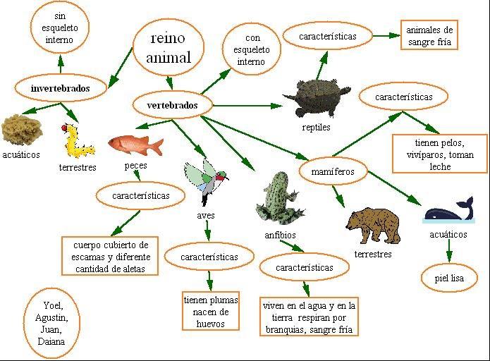 mapa mental reino animal