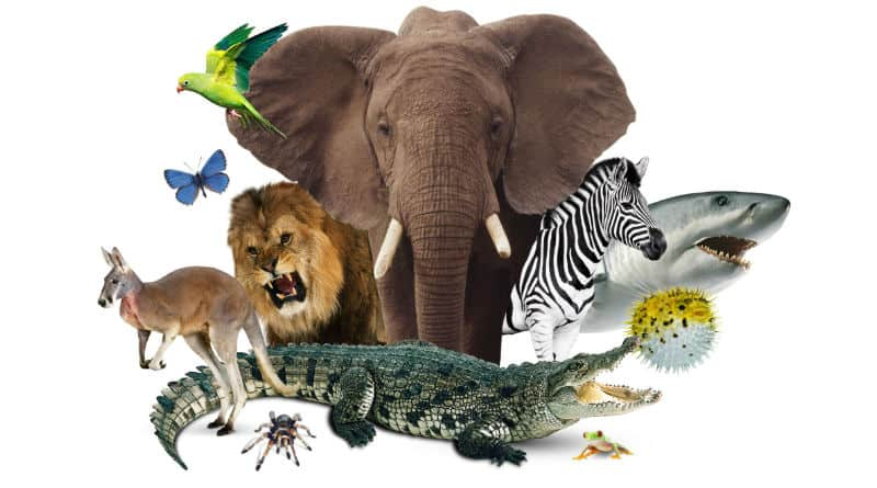 mapa conceptual de el reino animal