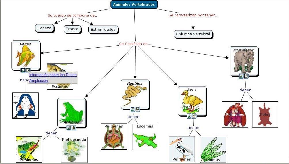 mapa mental del reino animal