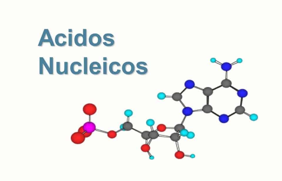 mapa conceptual de acidos nucleicos