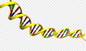 mapa conceptual de acidos nucleicos adn y arn