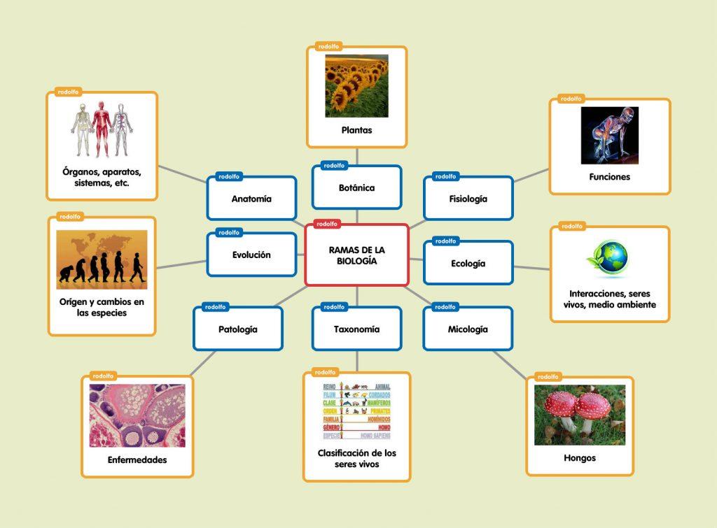 mapa mental de la biología y sus ramas