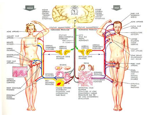 mapa mental de la reproducción asistida