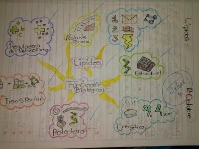 mapa mental de lípidos con imagenes