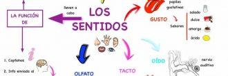 Mapa mental de los 5 sentidos