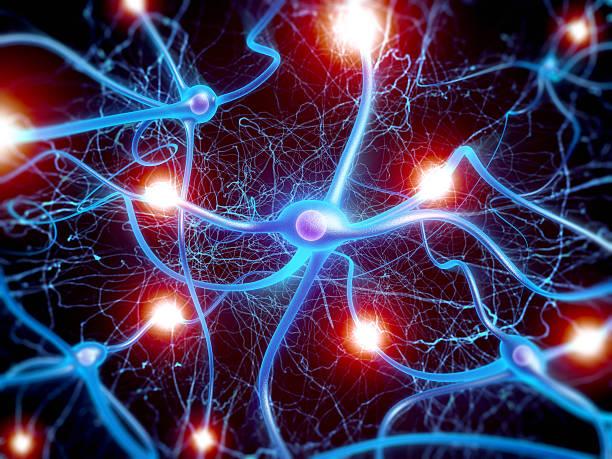 mapa mental del sistema nervioso y endocrino