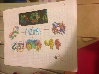 mapa mental sobre enzimas