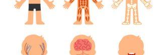 Mapa mental del sistema oseo