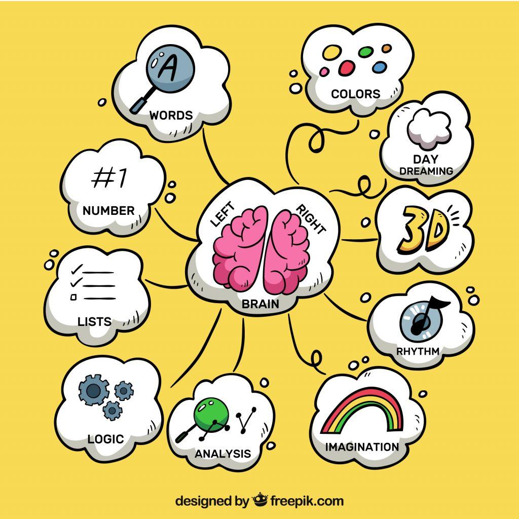 mapa mental del sistema nervioso y reproductivo